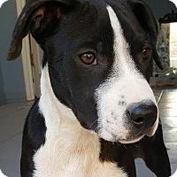 Adopt A Pet :: Lila - cupertino, CA