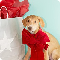 Adopt A Pet :: Macy - Fayetteville, AR