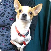 Adopt A Pet :: Lucky - Ogden, UT