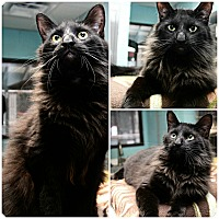 Adopt A Pet :: Jagger - Forked River, NJ