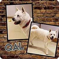 Adopt A Pet :: Qal - Valparaiso, IN