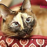 Adopt A Pet :: Lora - Baton Rouge, LA