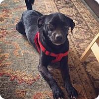 Adopt A Pet :: Nemo - Verona, NJ