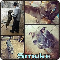 Adopt A Pet :: Smoke (courtesy) - South Park, PA