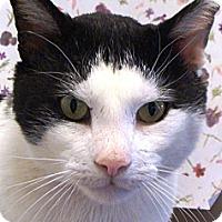 Adopt A Pet :: Trevor - Albany, NY