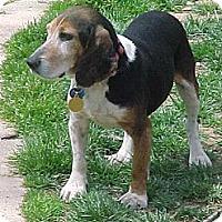 Adopt A Pet :: Edward Ridgely - Waldorf, MD