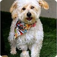 Adopt A Pet :: Alfie - Mission Viejo, CA