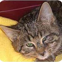Adopt A Pet :: Medinah - Lombard, IL