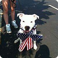 Adopt A Pet :: Cali - Vernon Hills, IL