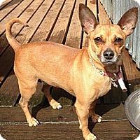 Adopt A Pet :: Gigi - Salem, OR