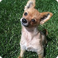 Adopt A Pet :: Lady - Hilliard, OH