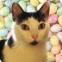 Adopt A Pet :: Andrea - Albany, NY