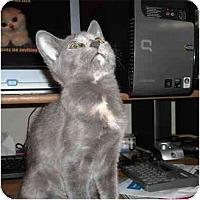 Adopt A Pet :: Kashi - Irvine, CA