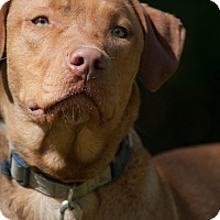 Adopt A Pet :: Gage - Salem, MA