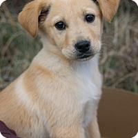 Adopt A Pet :: *Alexa - PENDING - Westport, CT