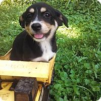 Adopt A Pet :: Penny - Warrenton, NC