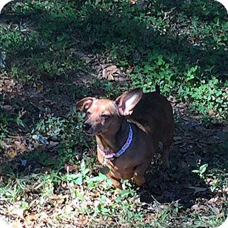 Dog Training Decatur Ga