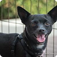 Adopt A Pet :: Taffy - San Marcos, CA