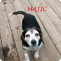 Adopt A Pet :: MAJIC - Ventnor City, NJ