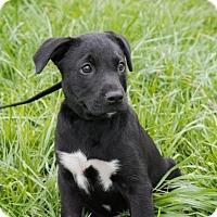 Adopt A Pet :: Tipper $250 - Seneca, SC