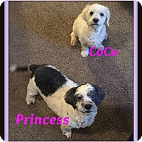 Adopt A Pet :: Princess and CoCo - Georgetown, KY