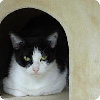 Adopt A Pet :: Oyster - Shaftsbury, VT