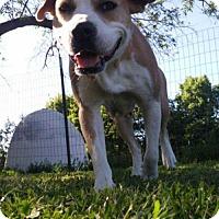 Adopt A Pet :: Bethel - Foristell, MO
