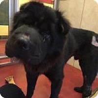 Adopt A Pet :: Fushi - Gainesville, FL