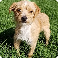 Adopt A Pet :: Bradley - Los Angeles, CA