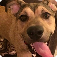 Adopt A Pet :: Austin - Lakeville, MN