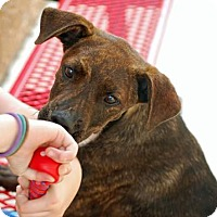 Adopt A Pet :: Skippy - Springtown, TX