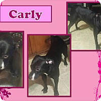 Adopt A Pet :: Carly - Ringwood, NJ