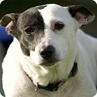 Adopt A Pet :: Piper - Potsdam, NY