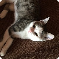 Adopt A Pet :: Francine - Toledo, OH