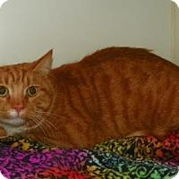 Adopt A Pet :: Tiggs - Lowell, MA