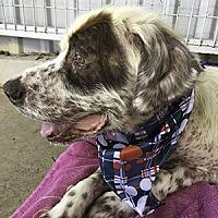 Adopt A Pet :: Ryder - New Braunfels, TX