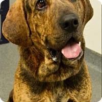 Adopt A Pet :: Odom - Mt. Pleasant, MI