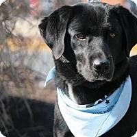 Adopt A Pet :: Libby Lou - Frederick, MD