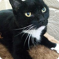 Adopt A Pet :: Franklin - Chula Vista, CA