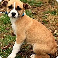 Adopt A Pet :: Karlee - Staunton, VA