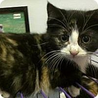 Adopt A Pet :: Kim Kardashian - Richboro, PA