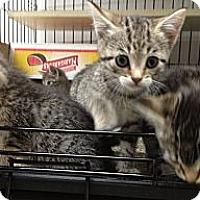 Adopt A Pet :: Tina, Joseph, Maria & Lucy - Island Park, NY