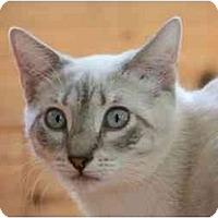 Adopt A Pet :: Fiona - Bonita Springs, FL