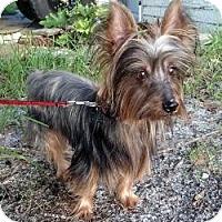 Adopt A Pet :: Watson - Clearwater, FL