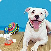 Adopt A Pet :: Max - Lima, OH