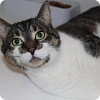 Adopt A Pet :: Albert - Caistor Centre, ON