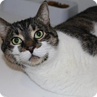 Adopt A Pet :: Albert - Hamilton, ON