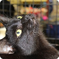 Adopt A Pet :: Binx - Berkeley Hts, NJ