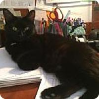 Adopt A Pet :: Sasha - Duluth, GA