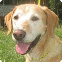 Adopt A Pet :: Elton - Charleston, SC